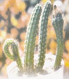 Tanaman kaktus dengan berlafadzkan Allah, can you see it?